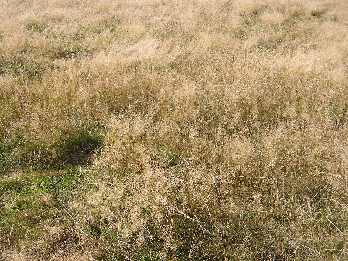 Textures nature elements vegetation dry grass dry grass - Dry Summer In Seattle