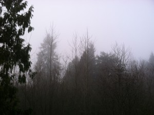 Morning fog should prevail around Seattle the next several days, with the sun breaking out around noontime