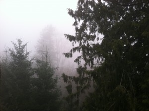 More fog is in store for Seattle this week, with temperatures struggling to hit the mid 50s.