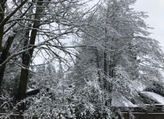Snow in Bothell